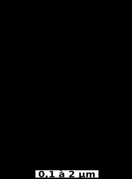 Cristal d'AgBr